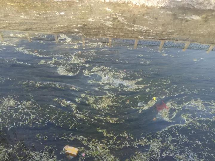 再访黑臭河 为家人护水||益齐乐水行·济南